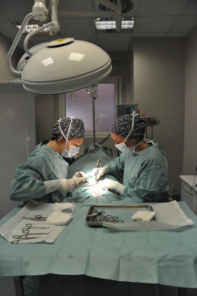 10 chirurgia veterinaria specialistica
