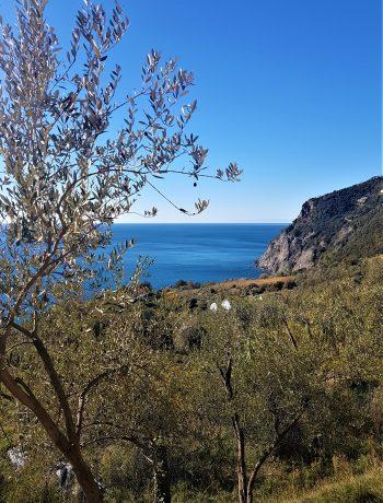 WineExperience a Framura: tra uliveti e vigneti a picco sul mare